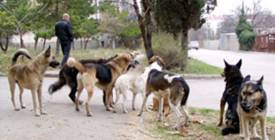 Місту потрібен притулок для собак