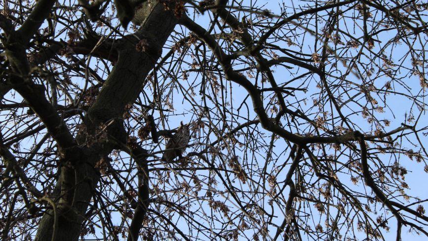 На площі оселилися сови. Фото дня