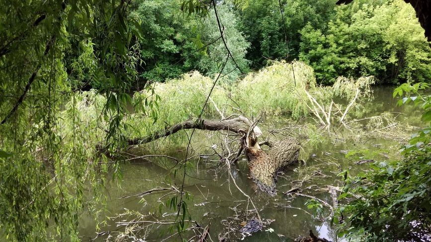 Негода повалила дерева на стадіоні (ФОТО)