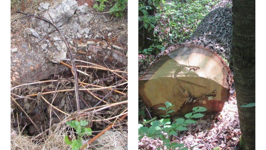 Прогулянка Козятинщиною: небезпечний люк, сміття та хитрі лісоруби