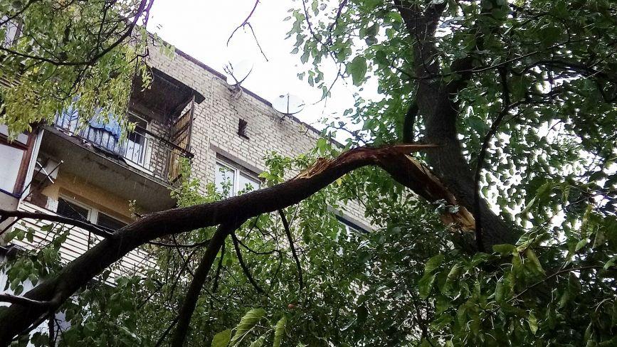 Навпроти Чехословацького будинку у дерево влучила блискавка