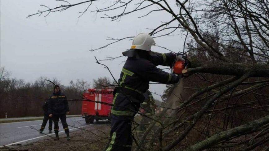 Наслідки вітряної негоди: біля Тучі на дорогу впало дерево