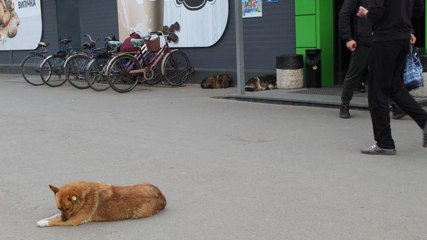 Кусають в парку, на ПРБ і в Залізничному: ми перевірили, де в Козятині нападають собаки