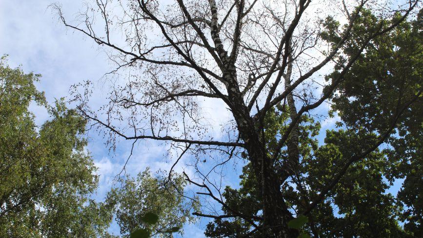 Пиляють дерева тому, що палити дровами дешевше, ніж газом