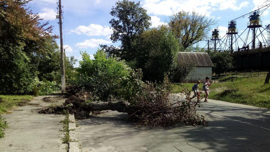 Біля танка повикорчовували дерева