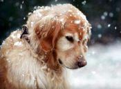 14 листопада — дощ зі снігом та ожеледиця