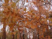 Чи покажеться сьогодні сонце? Погода у Козятині 2 листопада