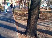 Фото дня: прибраний козятинський парк