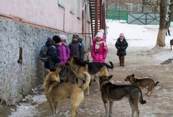 Козятинчани висловили своє ставлення до бродячих собак