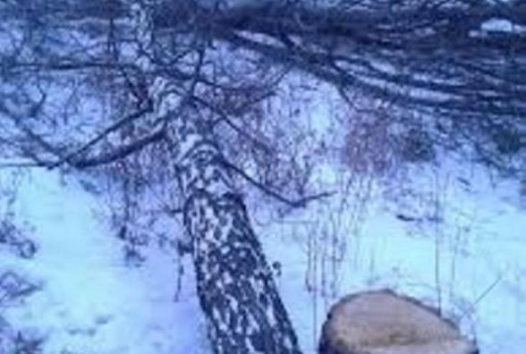Лісосмугу знищили по закону, але не по совісті