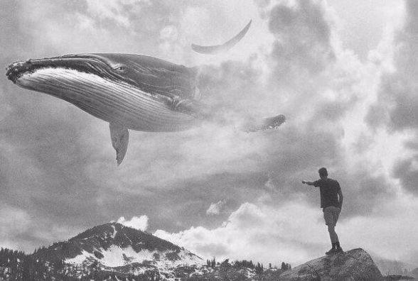 Жертва синього кита в Козятині — безвинна дівчина