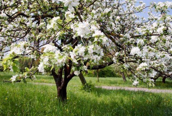Які дерева можна садити біля будинку – прикмети наших предків