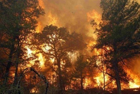 Щоб уникнути пожежі в лісі