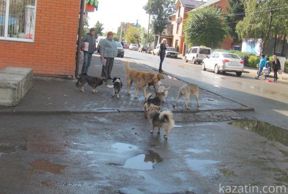 Нова зграя бродячих собак тероризує центр міста