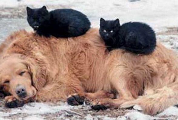 Тварин нагло викидають на вулицю