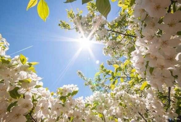 Яку погоду чекати козятинчанам сьогодні, 29 квітня. Прогноз