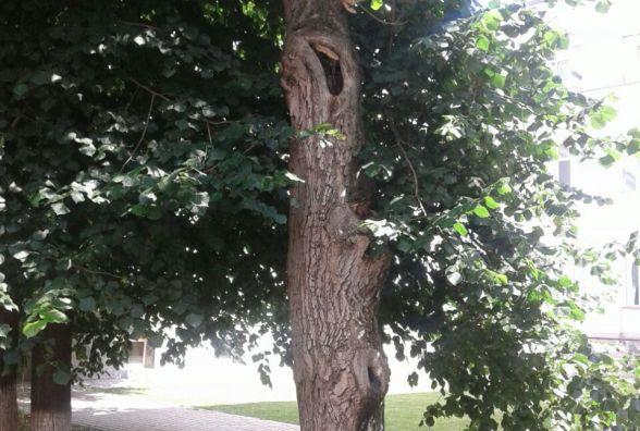 У Вінниці  дерева не ріжуть