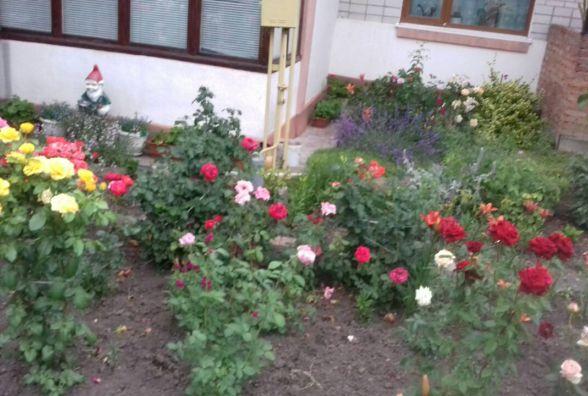 Краса на вулиці Гоголя