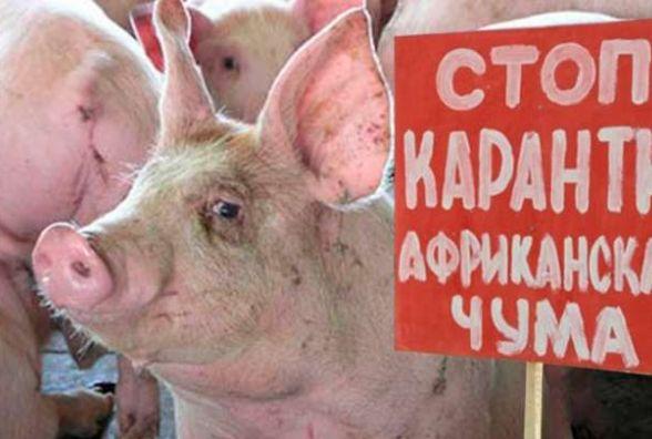 На Козятинщині спалахнула африканська чума: спалено близько тисячі свиней