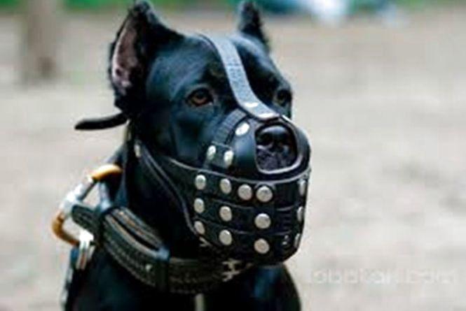 Мешканці вимагають бійцівських псів вигулювати в намордниках