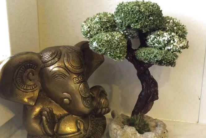 Дерево-бонсай з ісландського моху — подарунок та оздоровлення