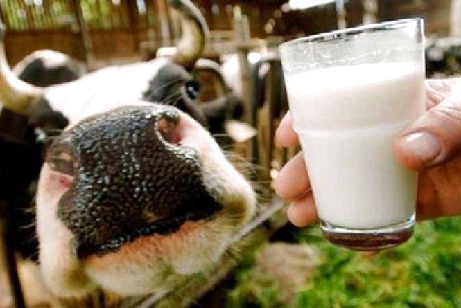 За обсягом виробництва м'яса і молока Вінниччина зайняла перше місце