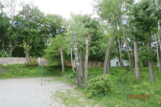 «Санітарна обрізка» від козятинських комунальників вбила дерева