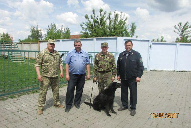 Службові собаки на охороні правопорядку