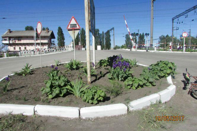 Влада почала висаджувати в Козятині квіти