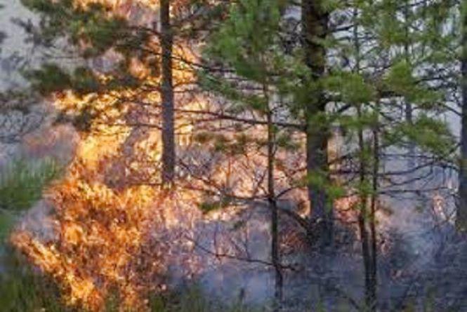 Через спеку на Вінниччині оголосили загрозу масштабних пожеж (ВІДЕО)