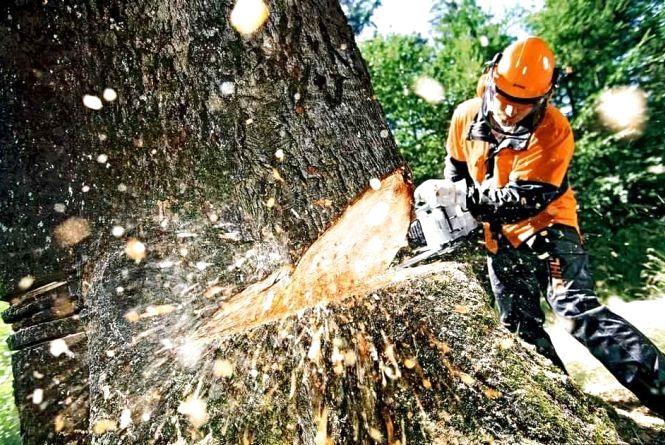 Ваша думка з приводу того, що з 89 дерев, які спиляли на Куликівського, 23 були живі й здорові, а 10-15 можна було врятувати косметичною обрізкою?