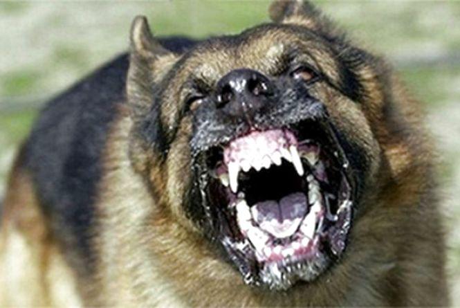 Бродячі собаки знайшли чергову жертву
