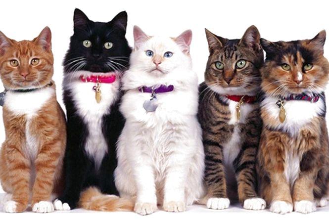 """""""Березневих котів"""" чуємо під вікнами"""