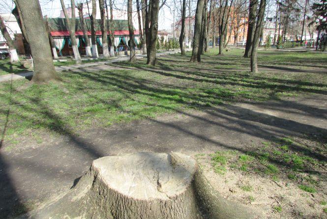 У центральному парку зрізали живий граб. Мешканці обурені