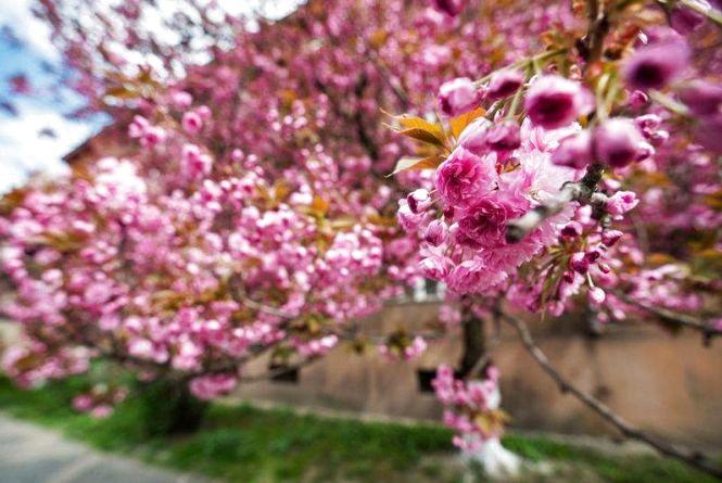 Яку погоду чекати козятинчанам 25 квітня. Прогноз