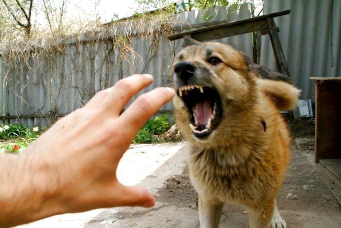 Вакцинуйте тварин від сказу — уже 1730 покусаних людей