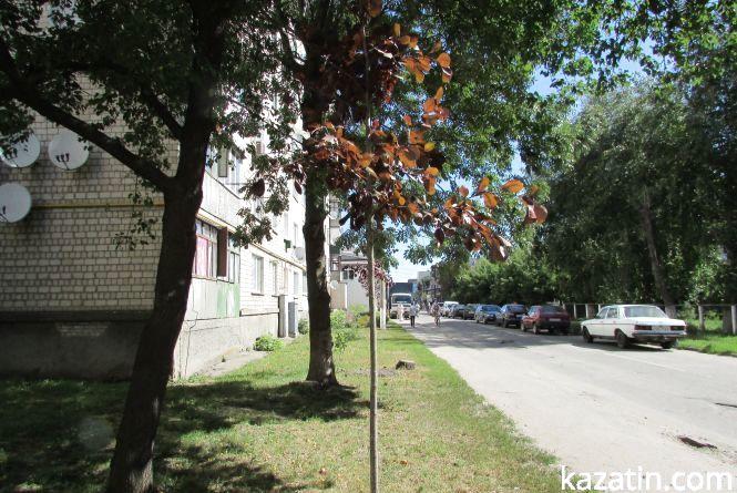 18 нових дерев висадили на неминучу загибель