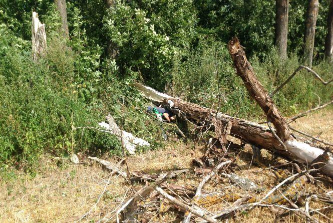 На Козятинщині  чоловіка вбило дерево