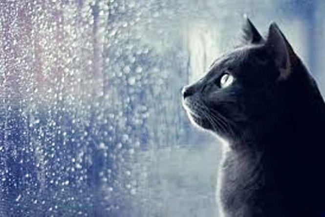 Погода на 24 жовтня: у Козятині дощ з вітром