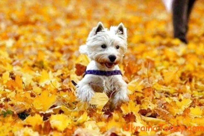 Проводжаємо осінь. 1 листопада в Козятині: +11