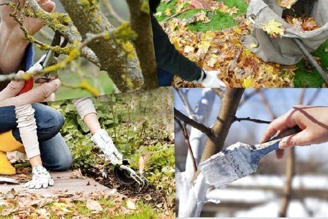 5 речей, які потрібно зробити садівникам у листопаді
