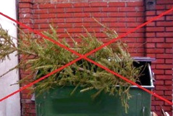 Як у Вінниці утилізуватимуть новорічні ялинки і як у Козятині?