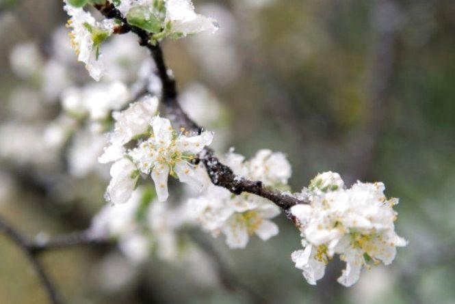 Сьогодні, 15 квітня, у Козятині зранку заморозки