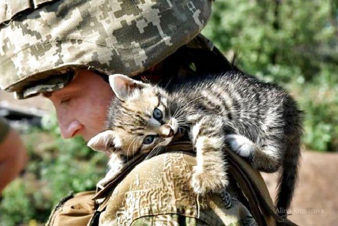 Українські військові показали своїх котиків (супер підбірка фото)