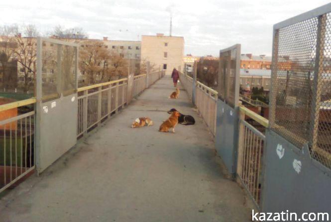 Фото дня: болотяні дороги та собаки