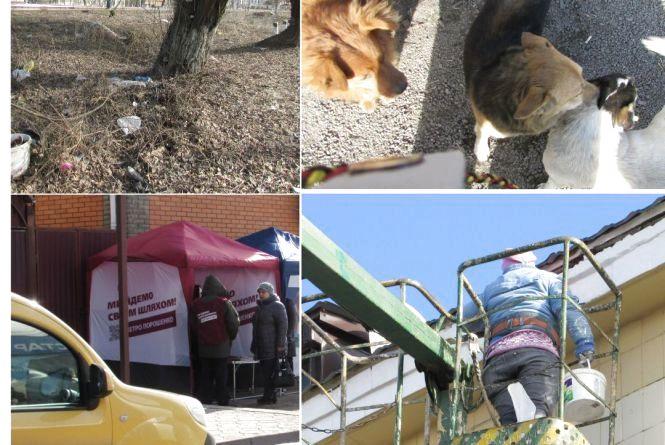 Фото дня: собаки, сміття, ремонт та вибори