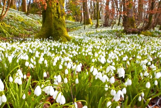 21 березня – свято весняного сонцевороту