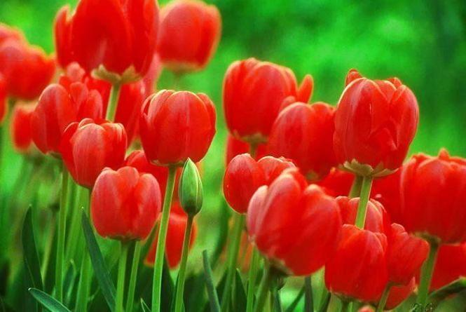 3 квітня – яке сьогодні свято та що не можна робити в цей день