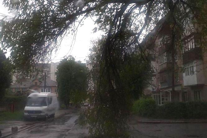 Наслідки негоди на Вінниччині: 12 сіл без світла, підтоплені будинки та дерева, які впали на авто