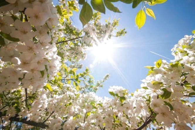 У Козятині 13 травня синоптики прогнозують до +20°C